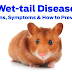 Wet-tail (Proliferative Ileitis)