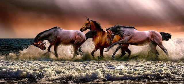 Image: Galloping Horses, by ATDSPHOTO on Pixabay
