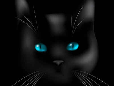 Xs Wallpapers Hd Black Cat Blue Eyes
