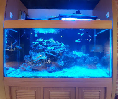 蔚藍的海水缸之魚兒魚兒水中游