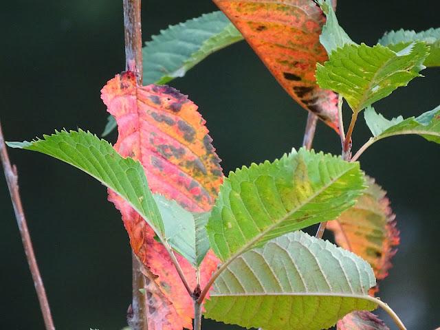 automneparcduhéronvilleuvedascqhautdefrance