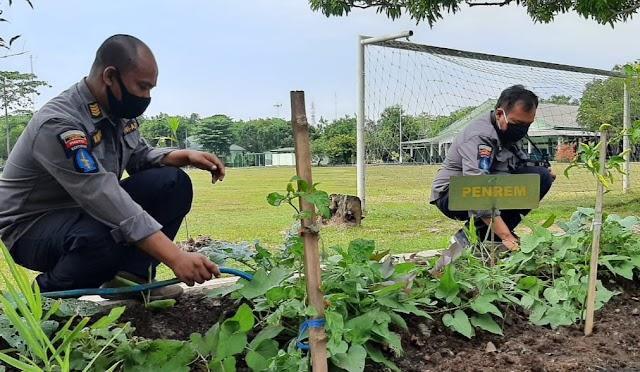 Korem 063/SGJ, Sulap Lahan Sempit Jadi Kebun Sayur Mayur