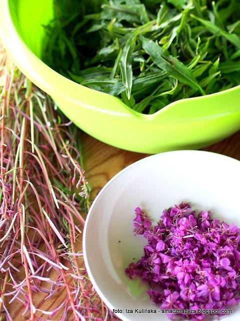 kiprzyca, herbata z wierzbowki, rosliny jadalne, ziola, laka, kwiaty jadalne, ivan czaj, russian tea, przetwory domowe