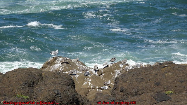 Oregon Seabirds Watching Depoe Bay