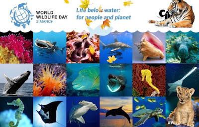 World wildlife day images - World wildlife day Wishing picture 2020