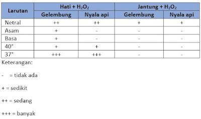hasil percobaan enzim katalase