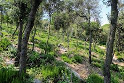 Bosques peculiares del área de Cellésc
