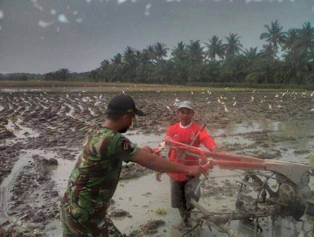 Serda Risman Terjun Langsung Dampingi Petani Membajak Sawah Dengan Ttraktor
