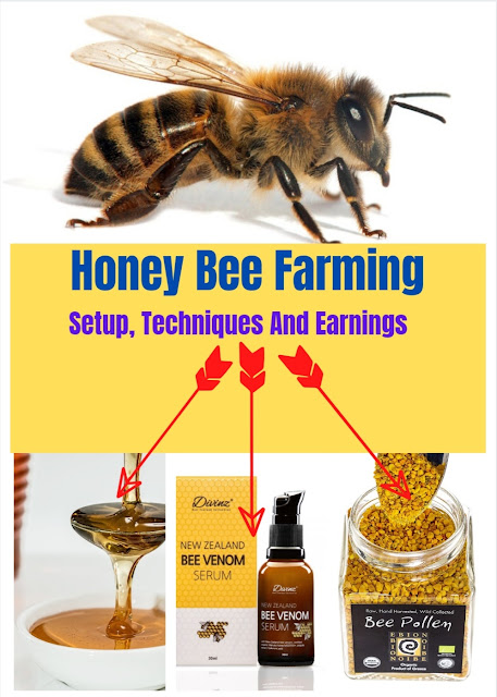 honey bee farming,beekeeping farming,honey,bee farming,honey bee farming in india,honey bees farming beginners in india,honey bee farming business,honey bee,honey bees farming beginners,how to start honey bee farming business,honey bee farming income,honey bee farming project,how to start honey bees farming beginners,honey bees,honey farming,agriculture farming in the philippines,agribusiness farming in the philippines,farming,bee farming business plan,bee keeping farming in hindi