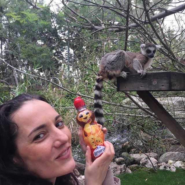 Visitando a los lémures con Lanjarón Kids