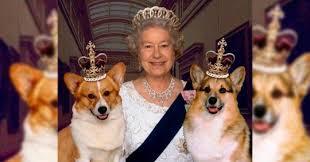 corgis rainha elizabeth