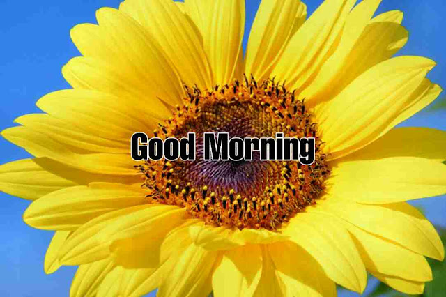 Awesome good morning image with sun flower