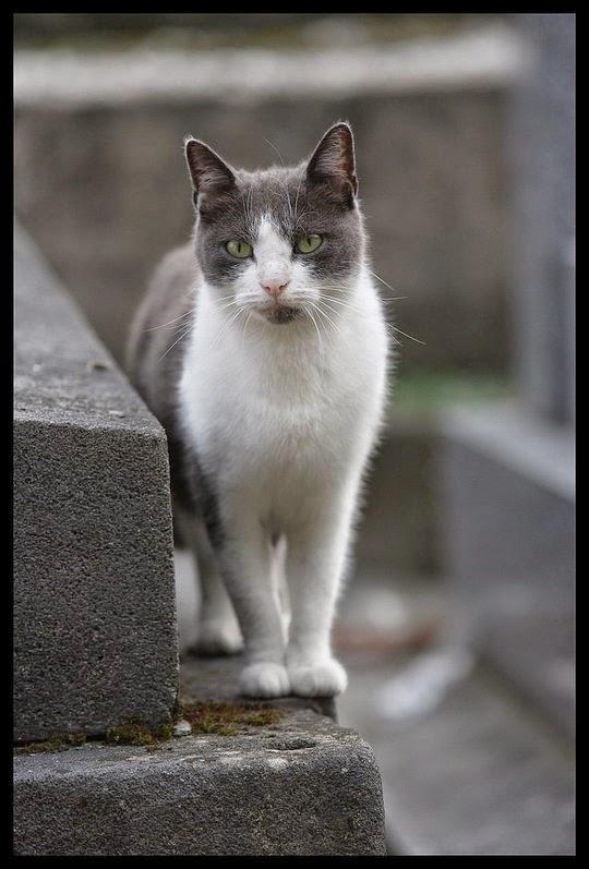 eerie cat picture