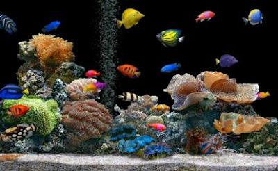 ikan hias laut yang bisa hidup di air tawar