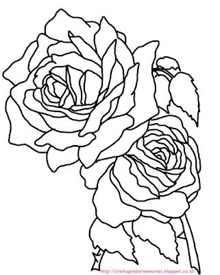 gambar bunga mawar - 6