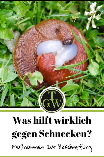 Schnecken im Garten bekämpfen mit Schneckenfallen gefüllt mit Schneckenkorn und Lockstoff sowie viele weitere effektive Maßnahmen. #schneckenbekämpfen #schneckenfalle #schneckenkorn #kupferband