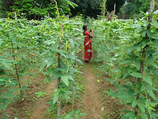 rural-women-make-example