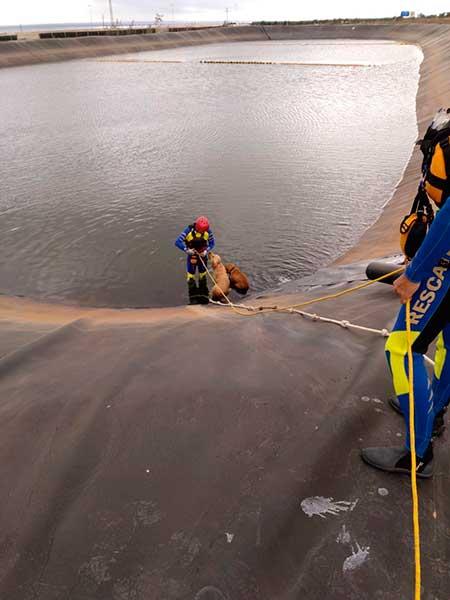 Perros rescatados de un estanque de Vecindario por bomberos de Arinaga, Gran Canaria