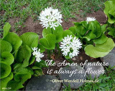 the amen of nature is always a flower