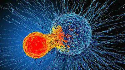 Células-T-atacam-células-cancerígenas