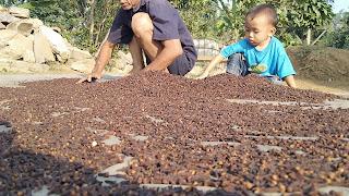 Harga cengkeh kering hari ini 73 ribu di Kiarapedes. Berapa di tempat Anda? Ini pesan petani kepada pemerintah