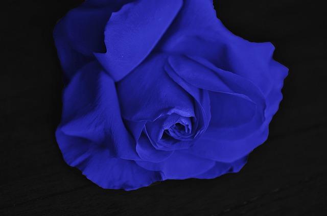 hoa hồng xanh đẹp ý nghĩa