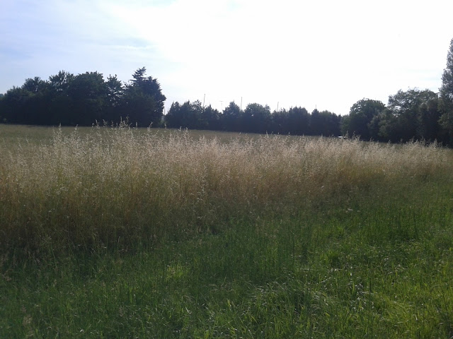 prado-hierba-alta