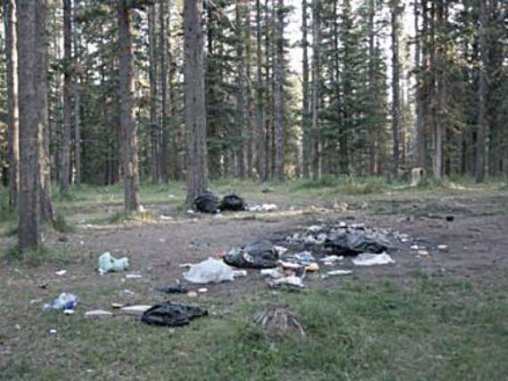 Campground among pine trees has been strewn with trash by trashy campers.