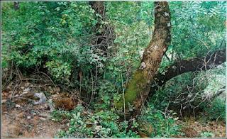 fotorrealismo-encantado-pinturas-mujeres-y-paisajes paisajes-mujeres-pinturas-fotorrealistas
