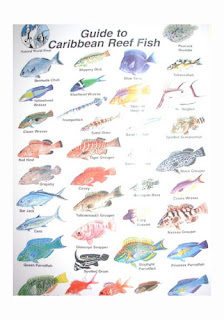 Aninimal Book: MS Squared Marine Biology Research Trip Belize 2012 ...