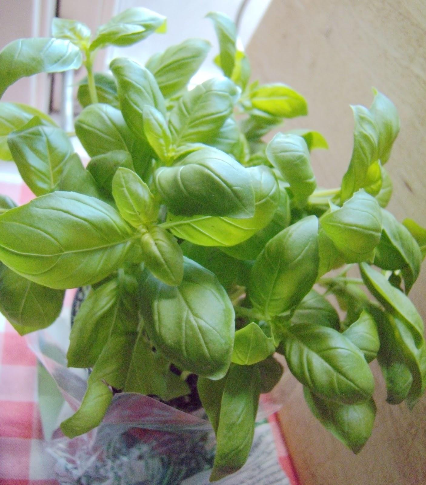 鳳英燕: 羅勒青醬 basilicum pesto + 海鮮麵