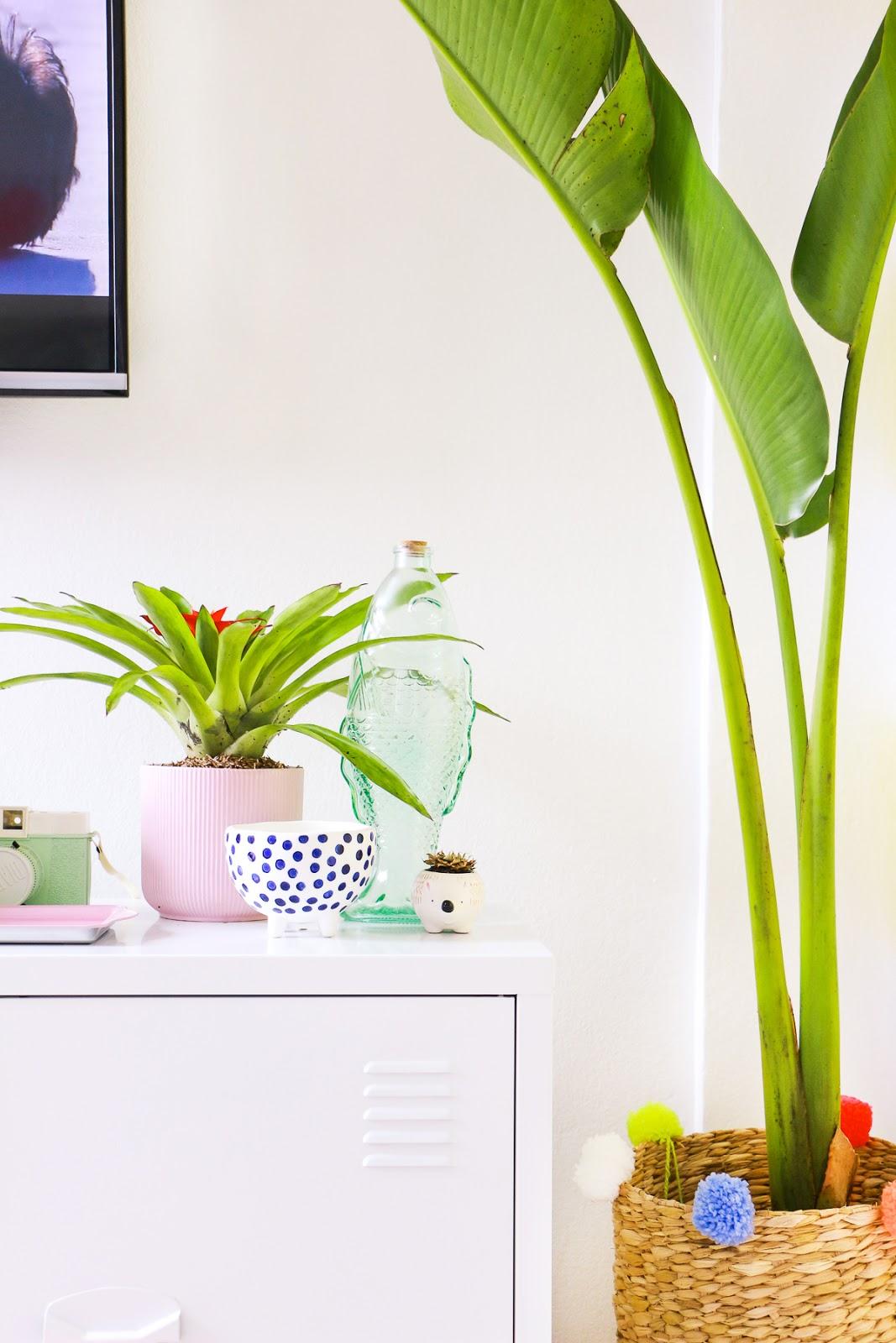 plantas tropicais para dentro de casa ravenala bananeira palmeira bromelia hera jiboia suculentas