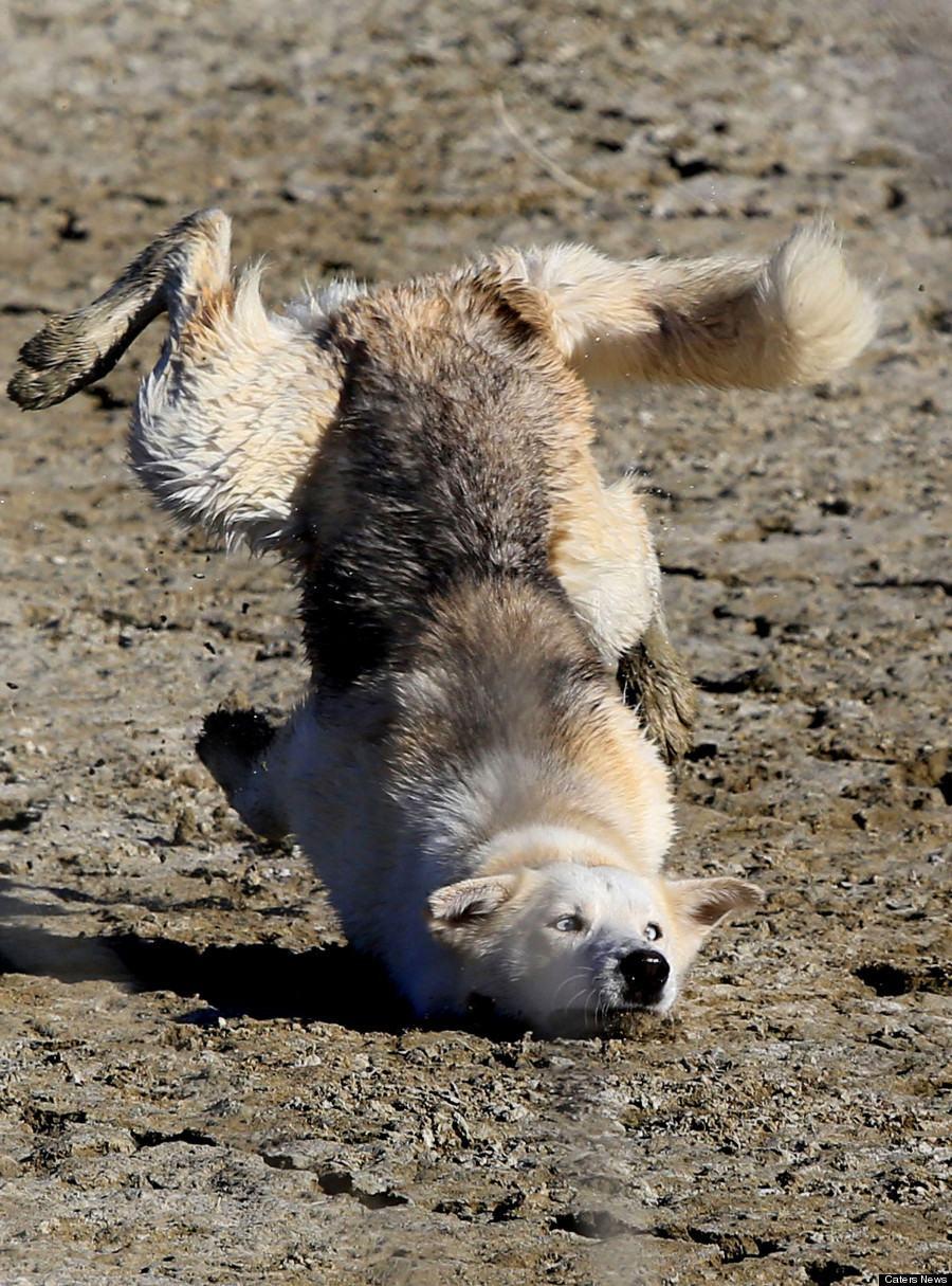 cachorro trolado