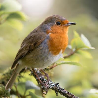 Birds, Mammals,