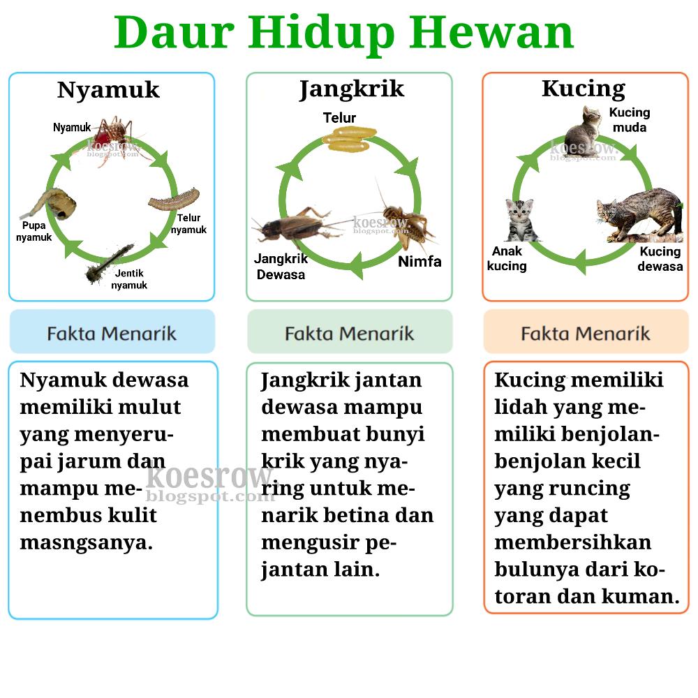 45+ Buatlah diagram panah siklus hidup hewan nyamuk terupdate