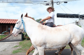 Man on brown horse leading two white horses on street in Puriscal.