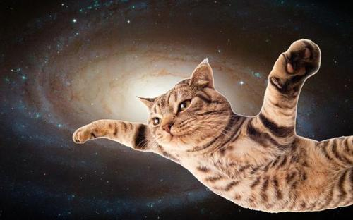 Effing Feline - Space Cat
