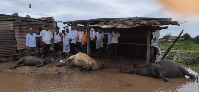 कुठे जनावरे वाहून गेली, तर कुठे घरादारांमध्ये पाणीच पाणी