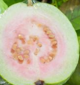 Guava fruit - Cancer