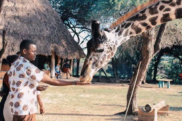Exploring the wilds of Kenya