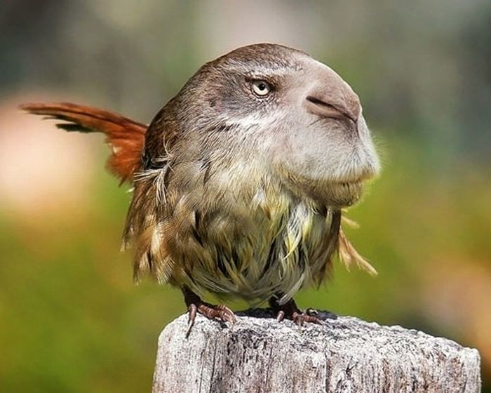 Funny hybrids of different animals - 30 Pics | Curious ...