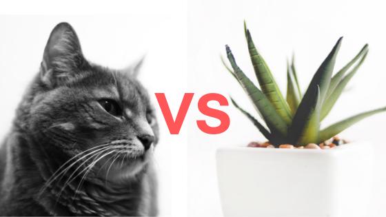 Ilustrasi Perbedaan Sel Hewan dan Sel Tumbuhan