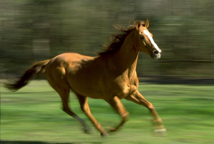 related pictures running horse - photo #15