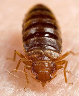 http://famio.co.ke/blog-why-bedbugs-keep-coming-back/