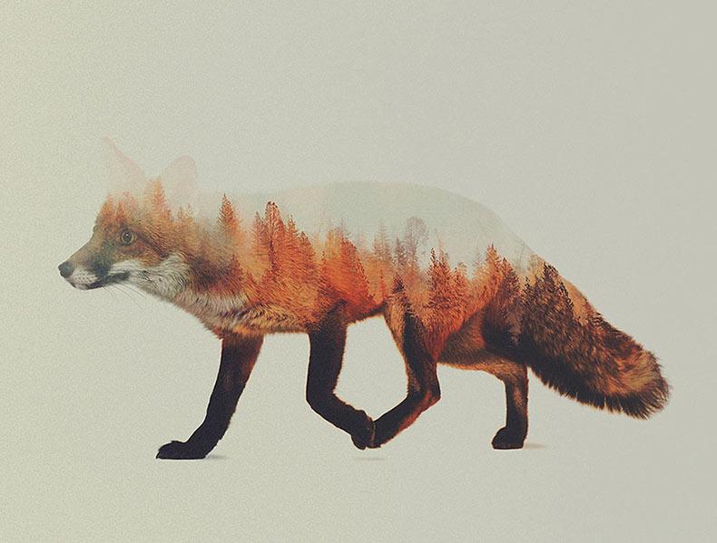 Artista noruego fusiona animales y sus hogares en fotografías de doble exposición