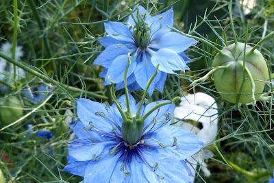 https://pixabay.com/pl/druhny-w-zielone-kwiat-kwiaty-460360/