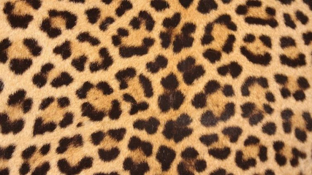 Two poachers with leopard skin arrested in Darjeeling