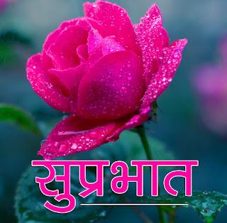 Flower Suprabhat Wallpaper Pics Free for Whatsapp