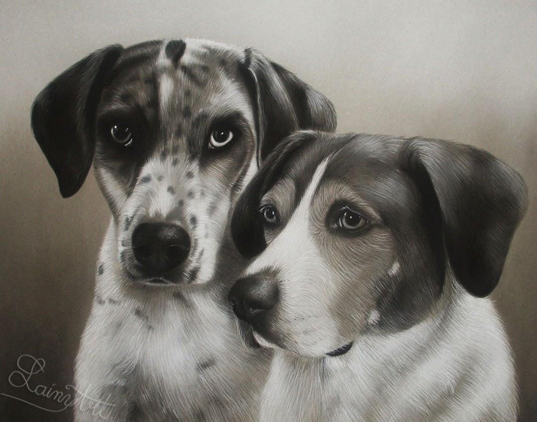 09-German-Shorthair-Pointers-Alaina-Ferguson-Animal-Portraits-Cats-Dogs-and-a-Guinea-Pig