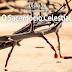 Lição 13 - O Sacerdócio Celestial